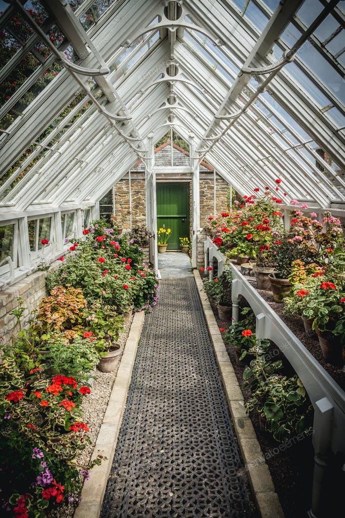 Old Fashioned Greenhouse Filled With Flowers