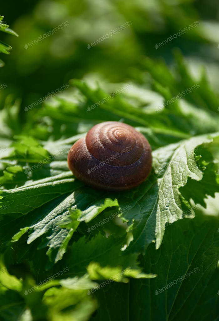 Close-up view snail on the vegetable leaf