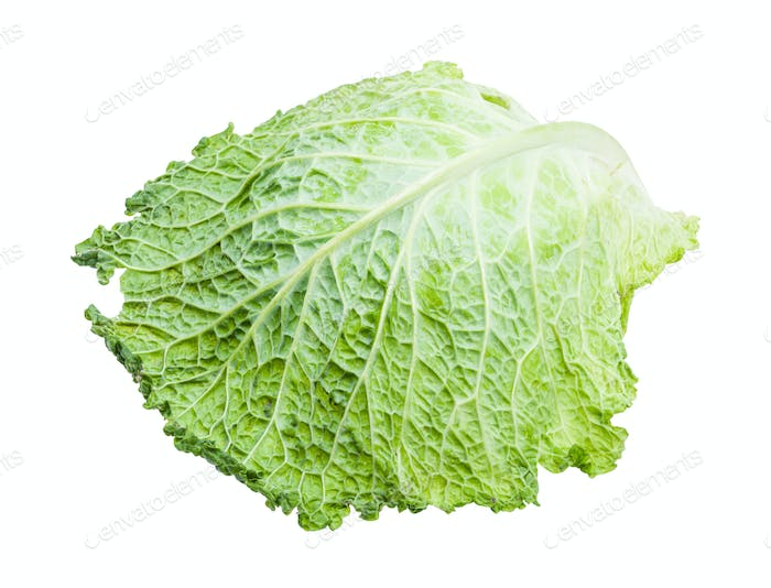 single green leaf of savoy cabbage isolated