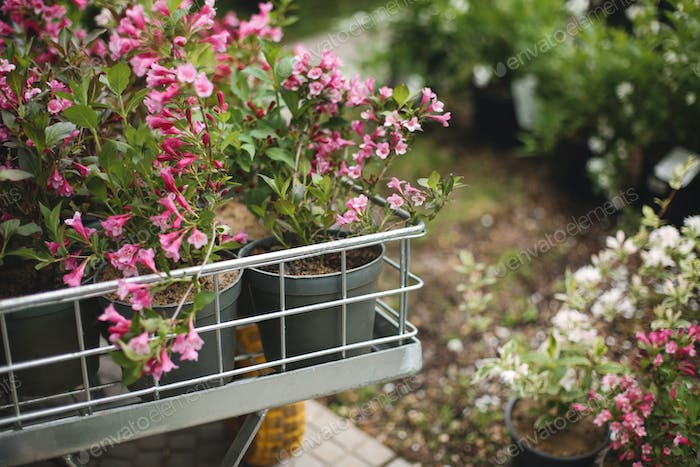 Close up photo of beautiful pink flowers in little garden cart