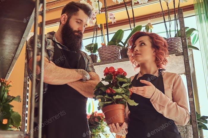 Zwei Floristen, schöne rothaarige weibliche und bärtige männliche Uniformen, die in Blumenladen arbeiten.
