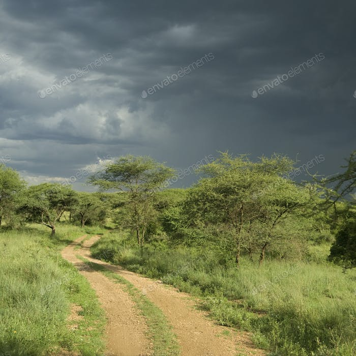 road through the serengeti reserve