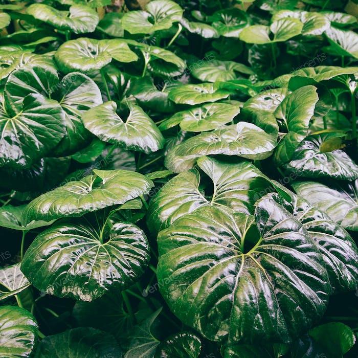Pflanze grünen Hintergrund. Pflanzenliebhaber Stil