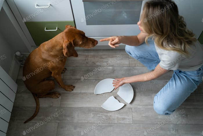 Woman owner scolding and asks who broke the plate, points her finger on pet, dog is ashamed