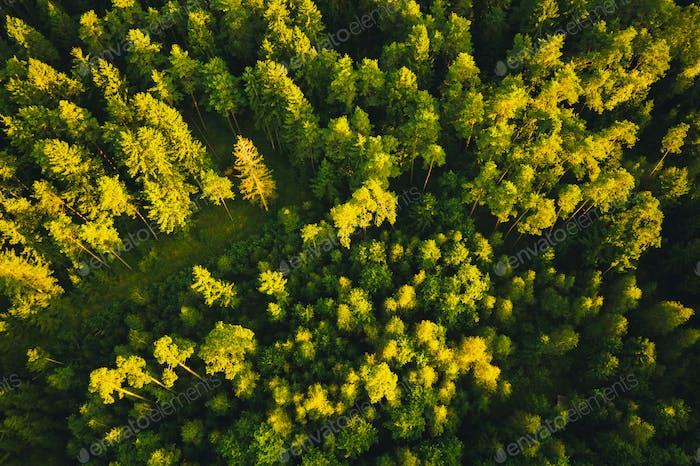 Vista aérea del bosque alpino verde. Zumbido disparar