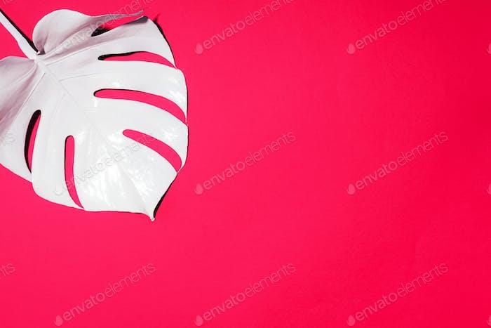 Sommerkomposition. Weiße tropische Palmblätter auf rosa Hintergrund. Sommerkonzept. Flacher Lag, oben