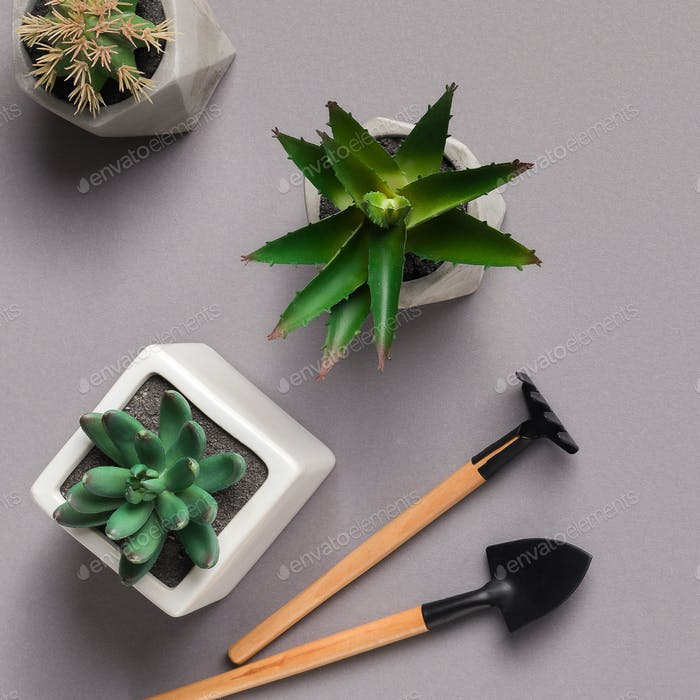 Home gardening. Mini succulents and gardening tools