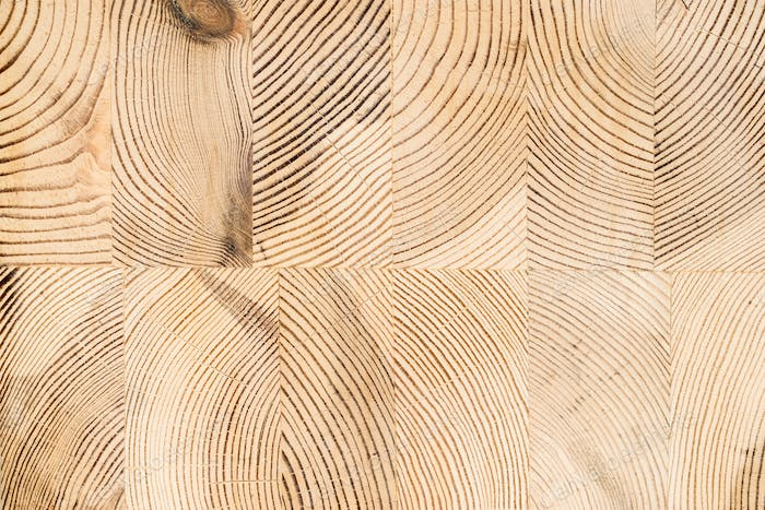 Wood structure background. Lumber industrial wood texture, timber butts background. Butt end of a