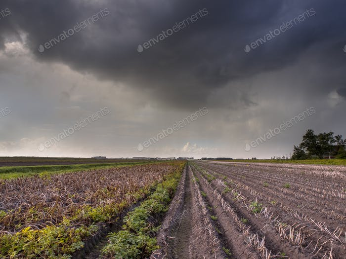 Storm over agricultural field Netherlands