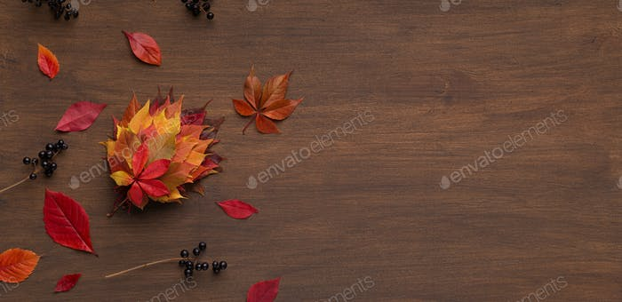 Autumn herbarium of different colored maple leaves