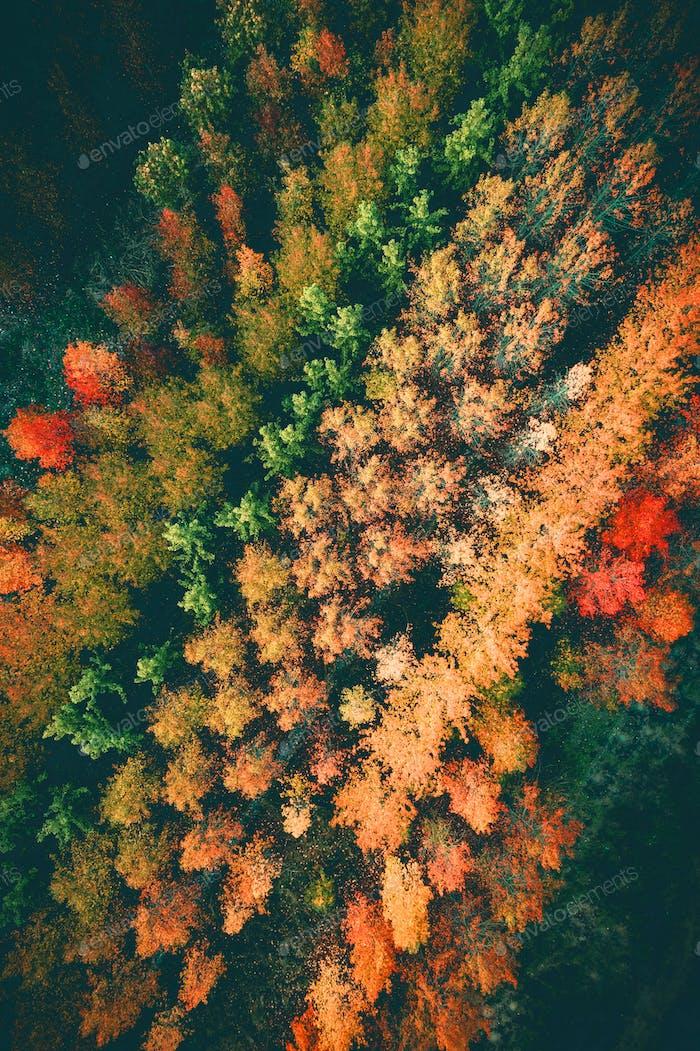 Herbstwald vertikal