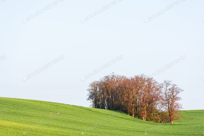 Rural landscape with field and trees