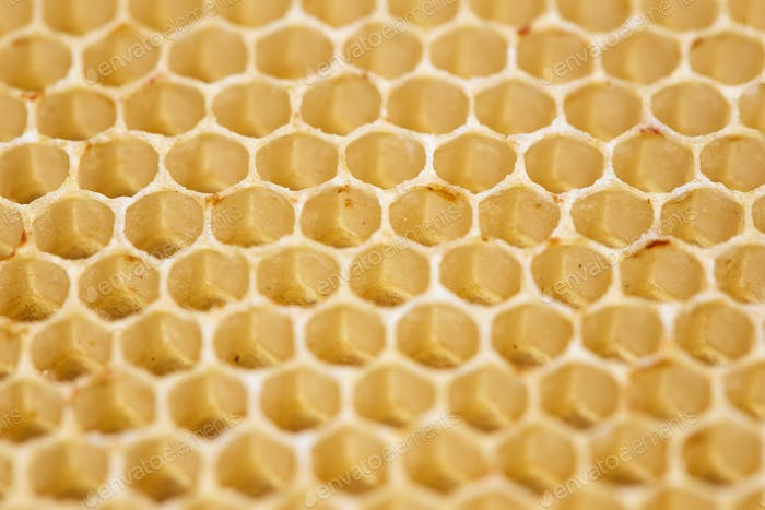 Honeycomb Cells Macro