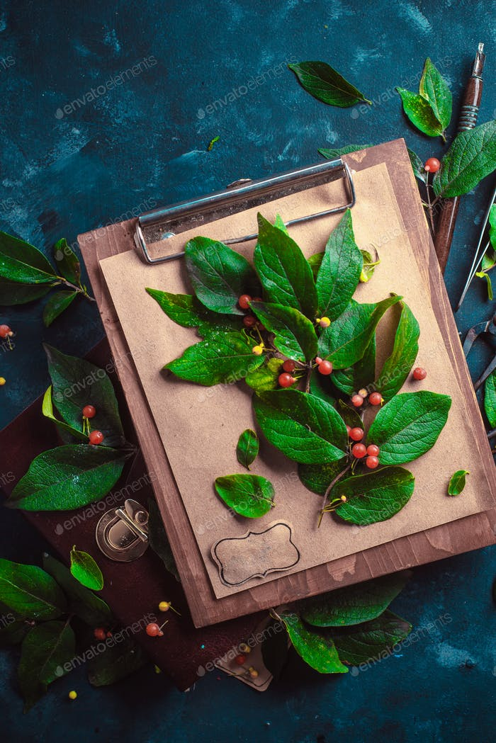Tree branch with green leaves and berries on a wooden clipboard. Botanist or school project concept