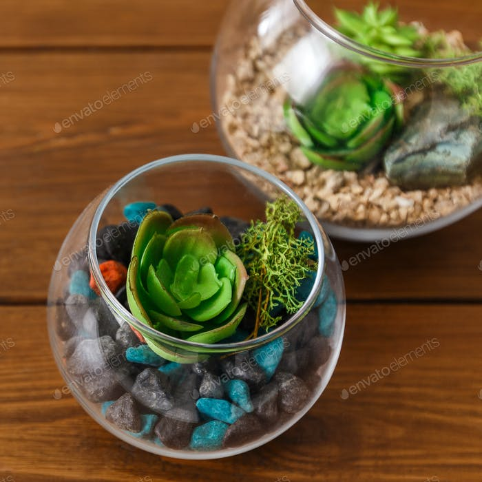Glass florarium vases with plants