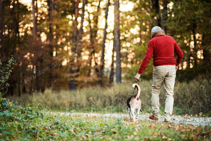 A rear view of senior man walking with a dog in an autumn nature at sunset.