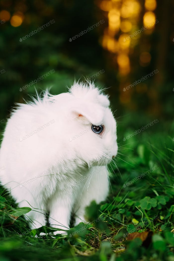 White Funny Bunny Rabbit On Green Grass
