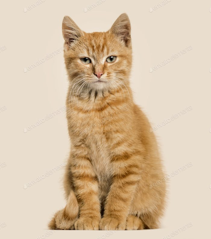 Ginger cat, sitting, colored background