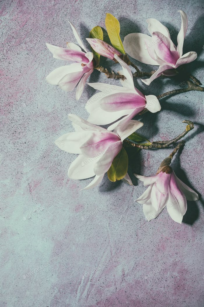 Magnolia flowers with leaves