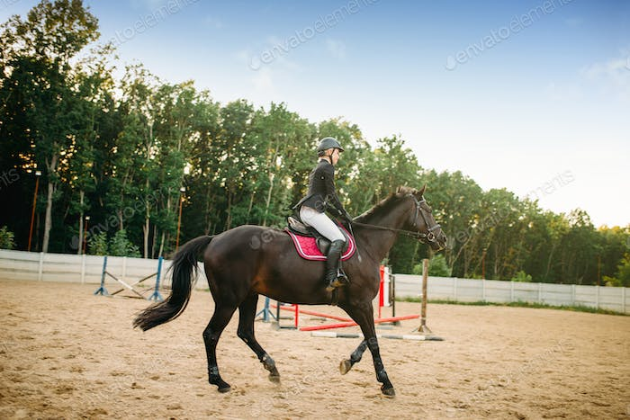 Equestrian sport, young woman rides on horse