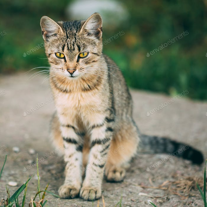 Lonely, Sad, Homeless Cute Tabby Gray Cat Kitten Pussycat