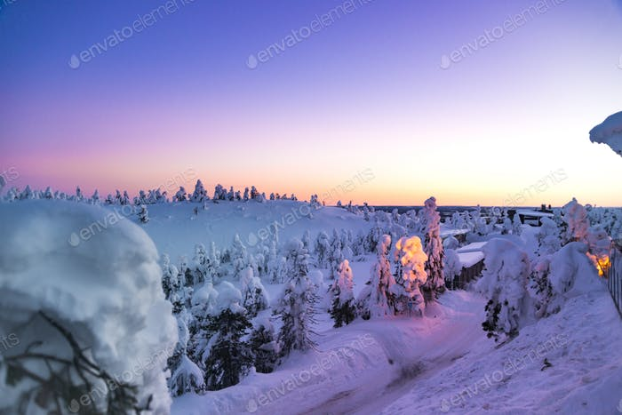 Fantastic winter sunrise in mountains with snow covered fir trees