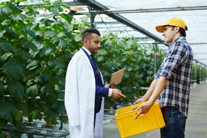 Discussing harvest