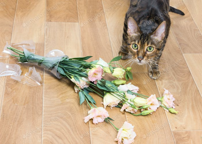 Cat breed toyger dropped and broken glass vase of flowers.