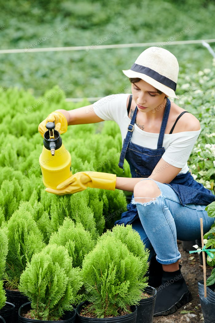 Woman taking care of small cypress plants