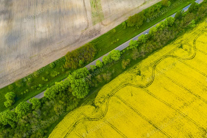 Drone View of Yellow Rape Seed Fields