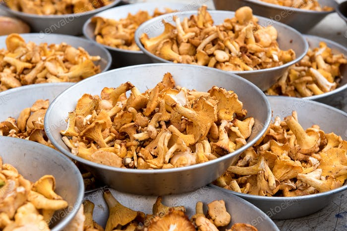 Chanterelle mushrooms in metal bowls