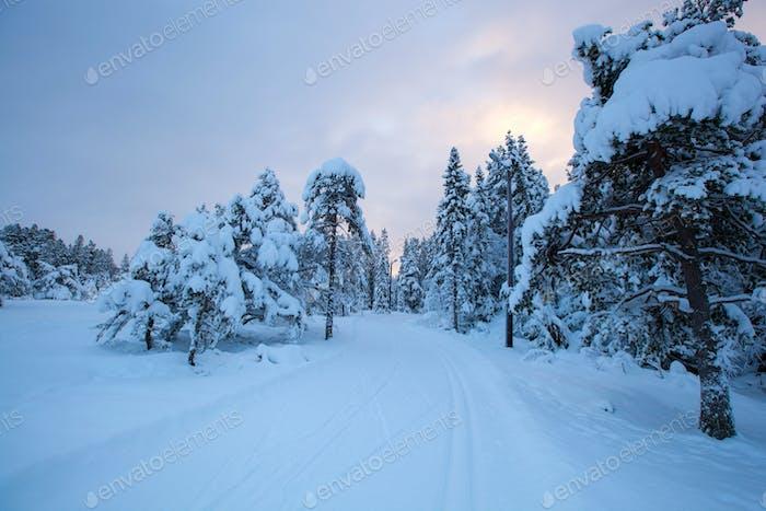 schöne Winterlandschaft Schneebaum