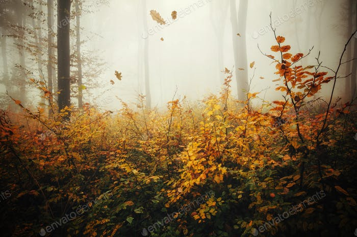 Leaves falling in autumn forest with fog