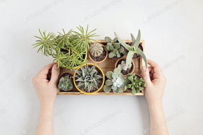 Top view of home potted plants. Home gardening, interior decoration concept