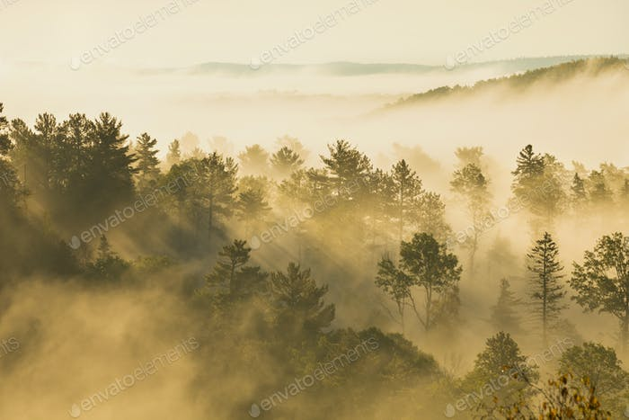 Trees on a Hillside in Early Morning Light and Fog