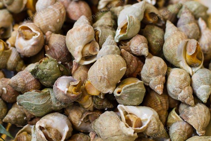 Sea snails on a market