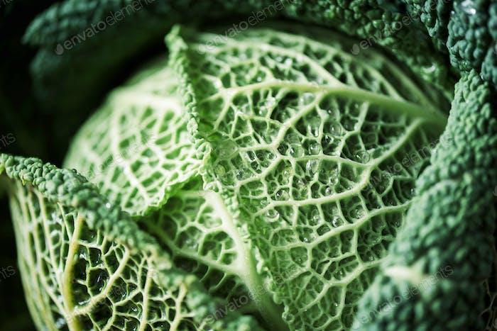 Roher Grünkohl Textur. Bio Wirsing Hintergrund. Veganes und vegetarisches Ernährungskonzept