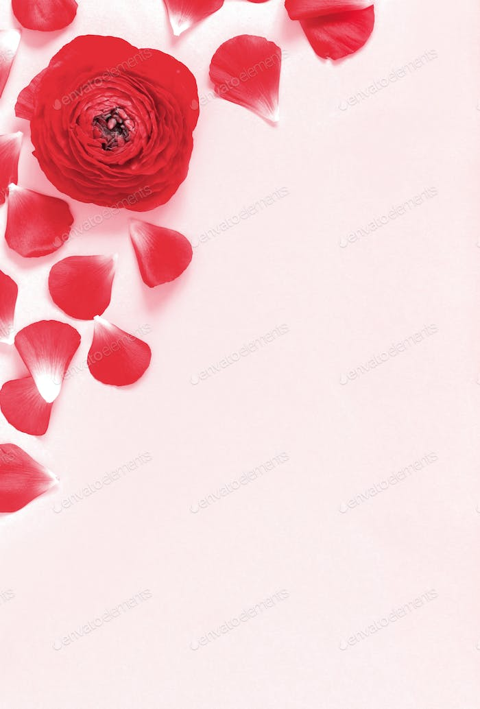 Red flowers and petals on a light pink background