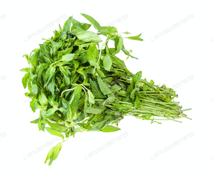 big bunch of fresh green mint isolated on white