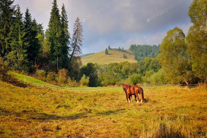 Grazing horse on mountain pasture. Beautiful mountain landscape.