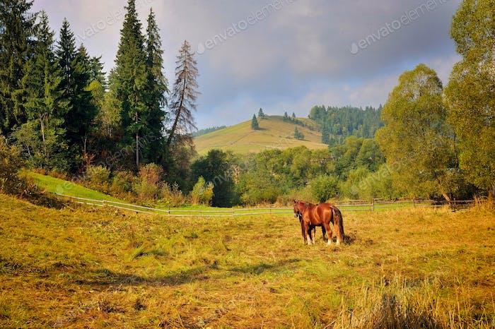 Grazing horse on mountain pasture. Beautiful mountain landscape.