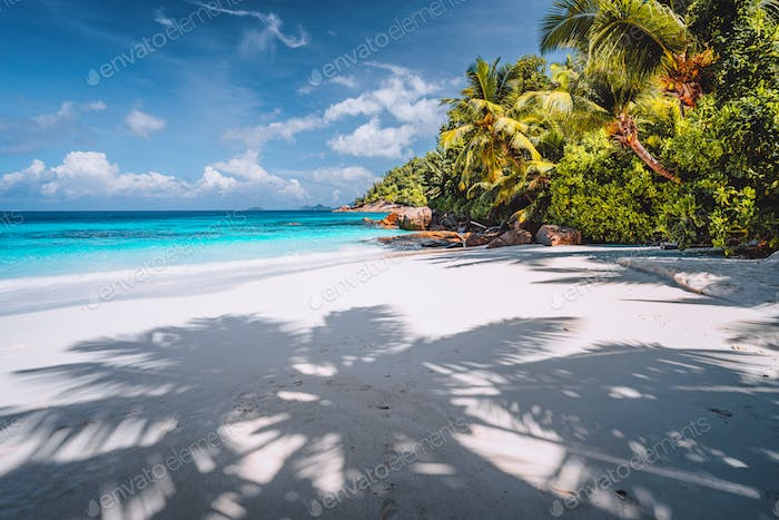Palm tree shadow on tropical tranquil beach with powdery white sand, crystal clear blue ocean lagoon