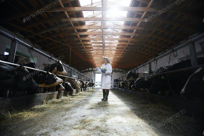 Veterinarian at Farm