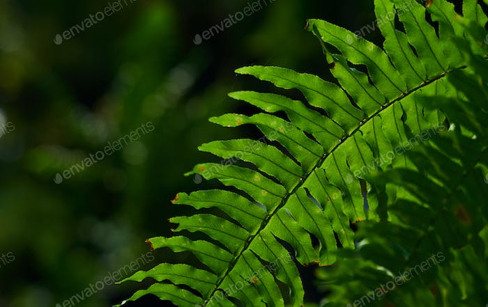 Close-up green fern leaves in the garden