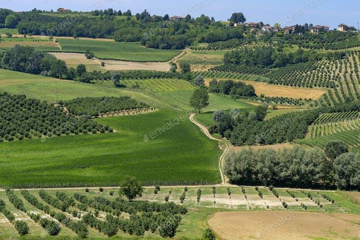 Vineyards near Govone, Asti, in Monferrato