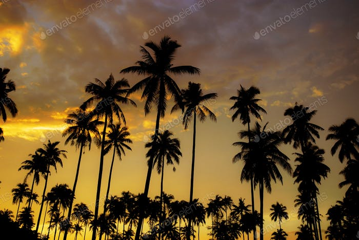 Palm tree with golden sky