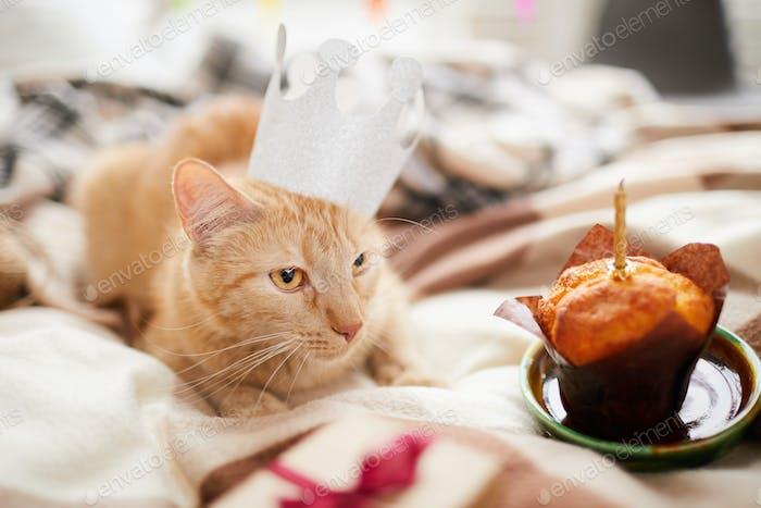 Cumpleaños Gato