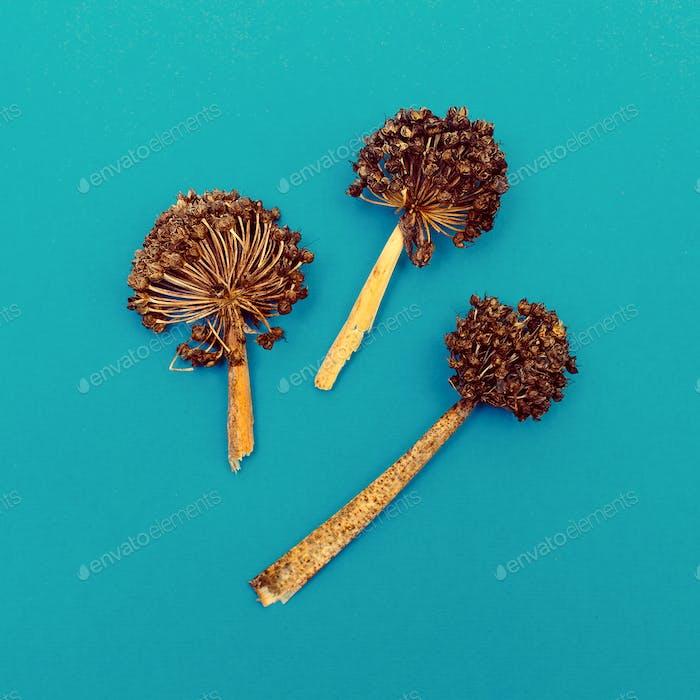 Dried seasoning Minimal style