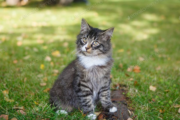 Beautiful homeless tricolor kitten