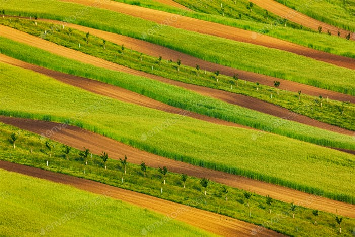 Striped fields of South Moravia